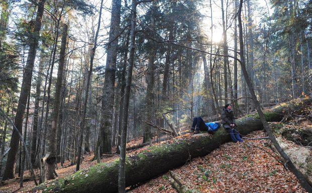 Wald in den Karpaten: So schön können Bäume in Rumänien sein (Foto: DANIEL MIHAILESCU/AFP/Getty Images)