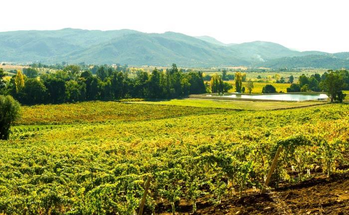 Das Tal hinter den Bergen: Villavicencio, optimale Lage für die Reben|© Daniela Stubbe