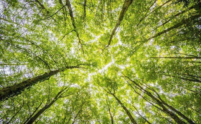 Der Klimawandel und seine Folgen bedrohen die deutschen Wälder in ihrer Existenz.|© Pexels