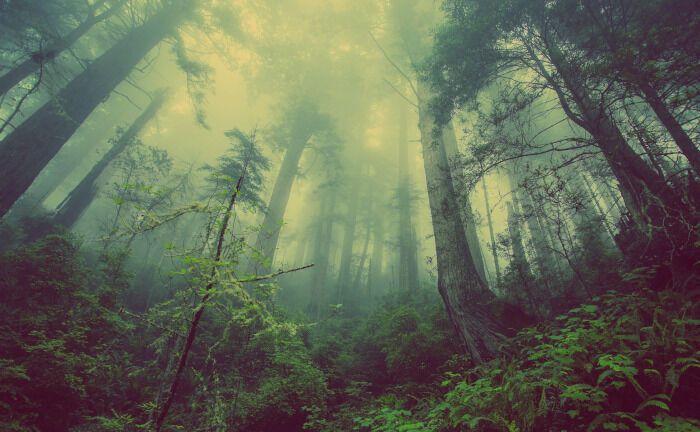 Wälder sind die artenreichsten Lebensräume überhaupt und ein Symbol für nachhaltige Anlagen: Das Bundesland Hessen will erstmals eine grüne Anleihe emittieren.