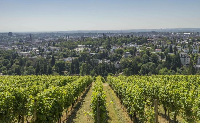 Blick auf Wiesbaden vom nahegelegenen Neroberg: Bei der Zusatzversorgungskasse des Baugewerbes ist ein anspruchsvoller Posten frei.
