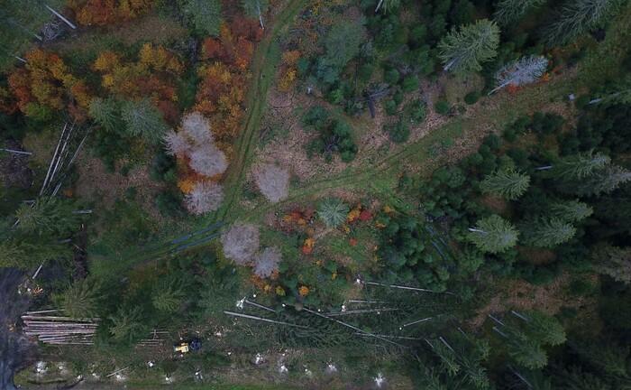 Vom Klimawandel bedrohter Wald im Harz
