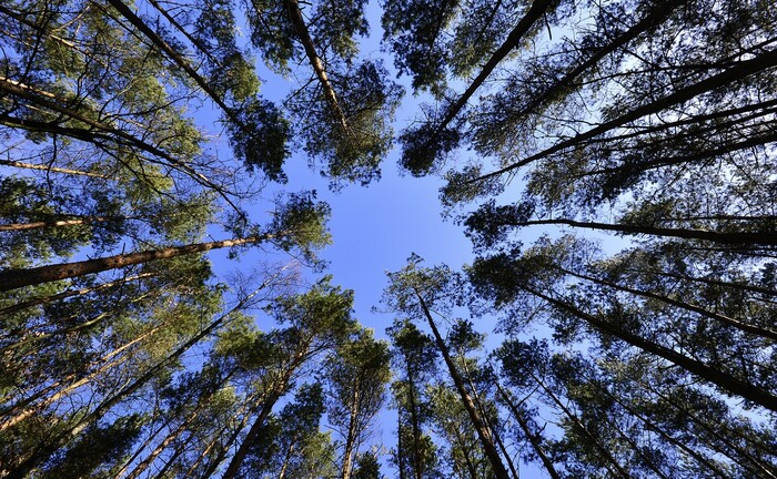 Vom Klimawandel gefährdeter Wald