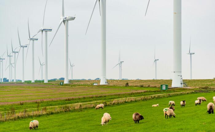 Windkraft auf norddeutschen Wiesen