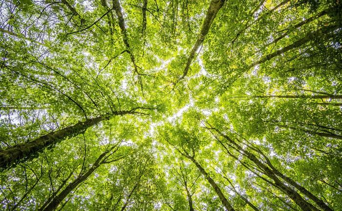Wald: Arts Am startet einen Nachhaltigkeits-Fonds.|© Pexels/Felix Mittermeier