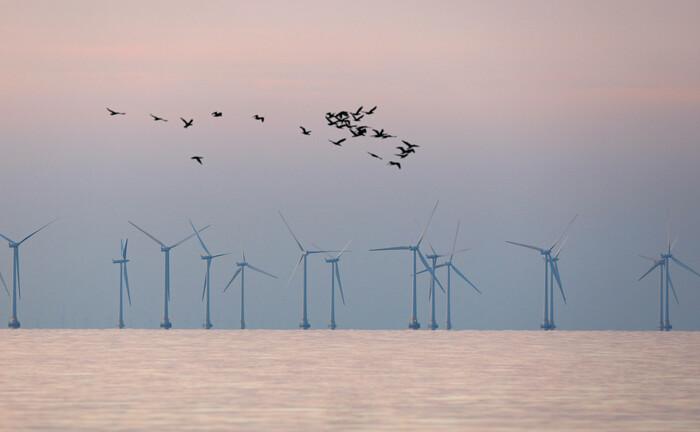 Ein Offshore Windpark