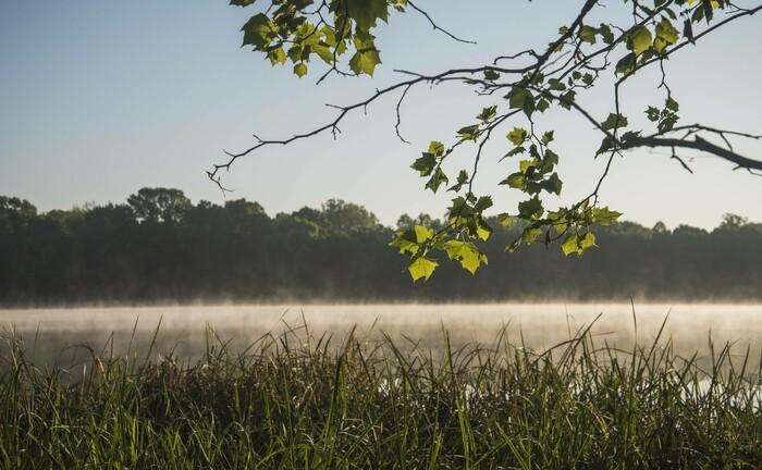 Blick auf einen Wald in Oklahoma