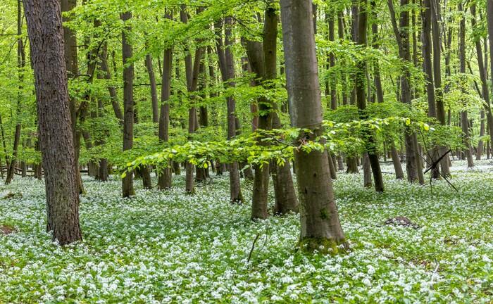 Ein Wald in Hessen