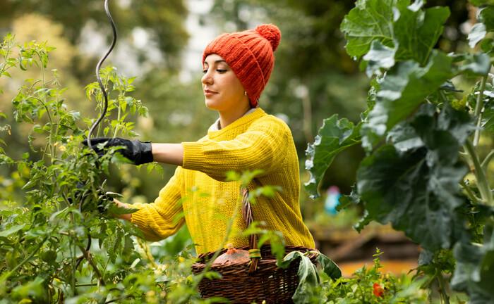 Anbau von Bioprodukten