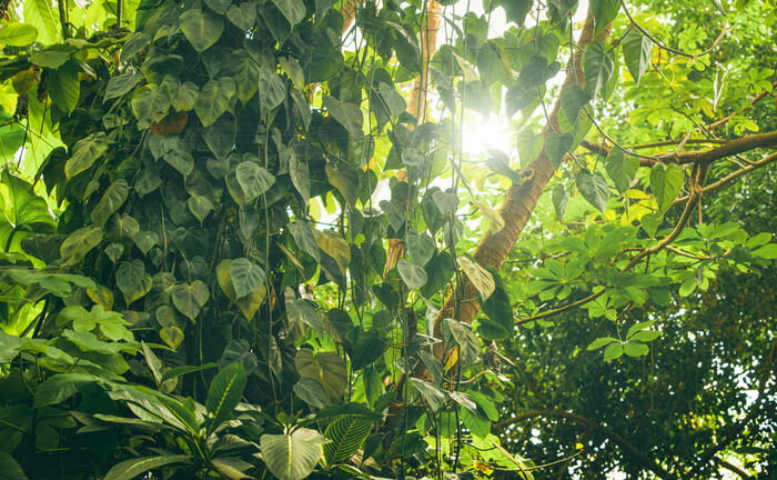 Pflanzen im Amazonas