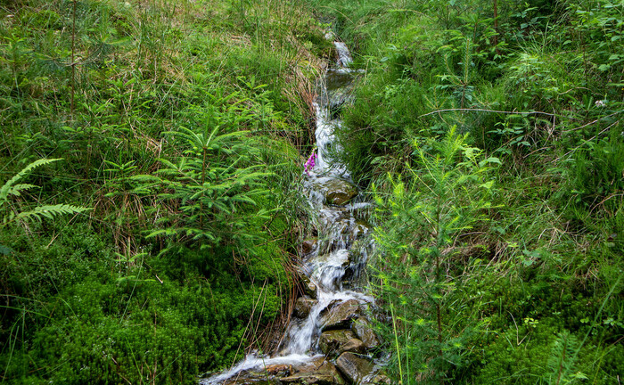Bachlauf im Odenwald