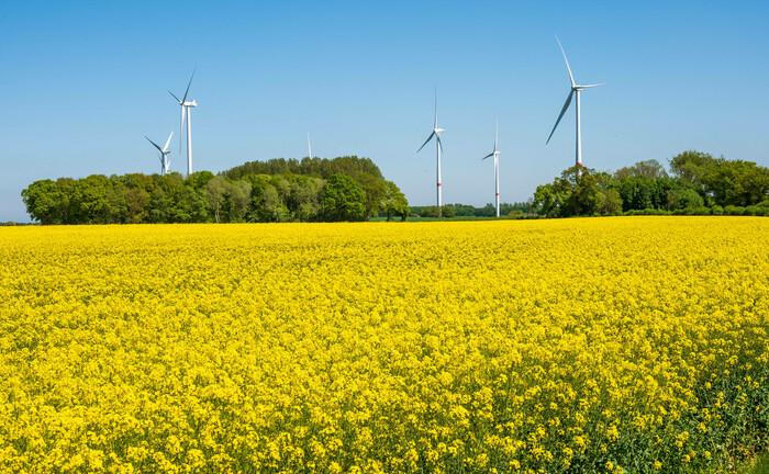 Windräder in Schleswig-Holstein